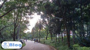 Academic Road